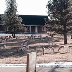 FE Warren AFB Directory - Lodging Office (Crow Creek Inn) photo number 2